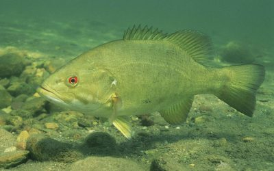 Top 5 Smallmouth Bass Summer Lures